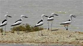 فريق رصد الطيور يعد خطة عمل ميدانية خاصة بالحنكور في بوبيان