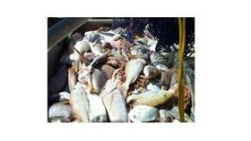230 كيلوغراماً من الأسماك الفاسدة «في سوق شرق»