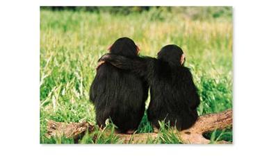 دراسة: القردة تنظم حركاتها مع بعضها البعض تماماً مثل البشر