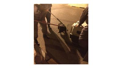 مواطن مطلوب ومتعاطٍ هدد رجال الأمن بـ«كلب»