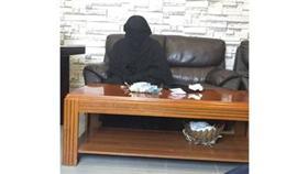 ضبط 7 أشخاص مطلوبين ومتسولة عربية وتحرير 42 مخالفة
