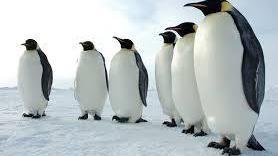 هذا هو سبب عدم تجمد طيور البطريق في القطب الجنوبي