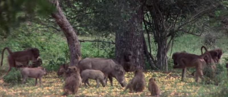 غابة الحيوانات المخمورة يزورها سائح