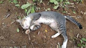 اعتادت القطة على النوم فوق قبر صاحبتها