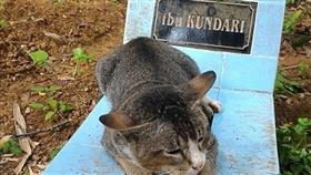بالصور - قطة وفية تعيش فوق قبر صاحبتها لعام كامل