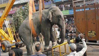بالفيديو - فيل يثير الذعر في شوارع الهند