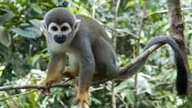قصة شاب أنقذته القردة بعد ان تاه في الأدغال 9 أيام