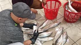 «البلدية»: مصادرة وإتلاف 283 كجم من الاسماك..وتحرير 14 مخالفة