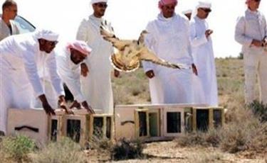 إطلاق سراح الصيادين القطريين المخطوفين