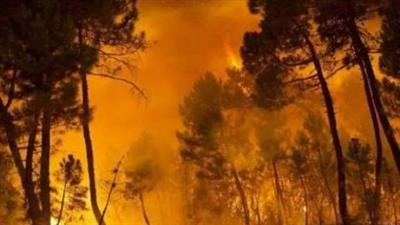 الحرائق تجبر 700 شخص على ترك منازلهم في إسبانيا