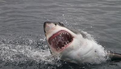 إعادة فتح شاطئ بولاية فلوريدا الأمريكية بعد هجوم مزدوج نادر لأسماك القرش