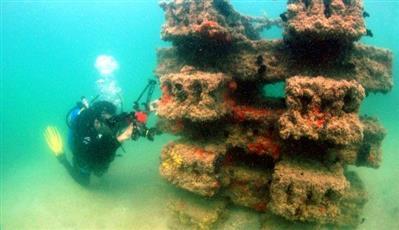 فريق الغوص: نتائج مبهرة لاستيطان الكائنات البحرية في محميات «جابر الكويت»