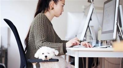 دراسة: اصطحاب الكلاب إلى العمل يحارب التوتر