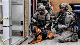 حادث صادم.. كلبان يعقران جنديا حتى الموت