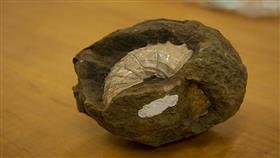 الكشف عن السبب الحقيقي لانقراض الديناصورات