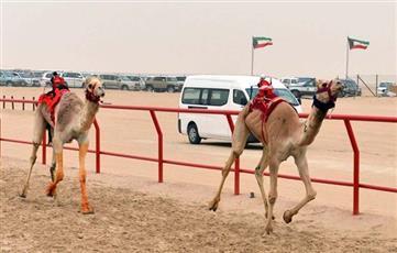 بطولة الكويت الدولية الـ 19 لسباقات الهجن تنطلق السبت