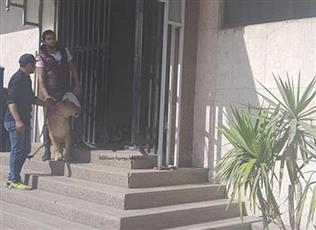أسد يهاجم صحفية في مبنى الإذاعة والتلفزيون المصري