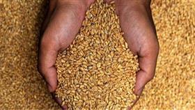 مصر تتطلع إلى تنويع مناشئ واردات القمح