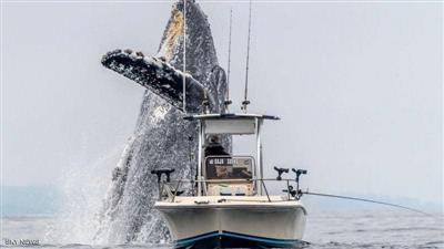 صور مذهلة لنجاة قارب صغير من حوت ضخم وسط البحر