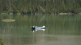 سقوط طائرة في نهر بمقاطعة ألبرتا الكندية