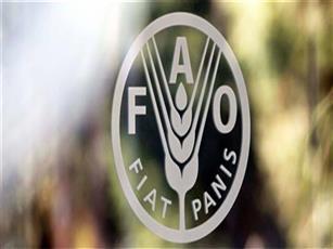 الكويت تقدم 3 ملايين دولار إلى «فاو».. لتعزيز الأمن الغذائي بسوريا