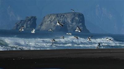 بعثة علمية روسية - صينية لدراسة التغيرات في المحيط الهادئ