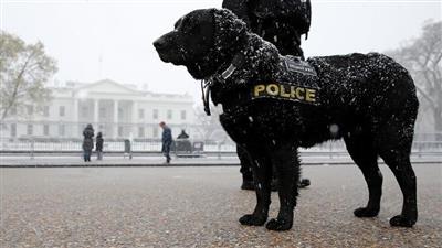 منح «وسام الاستحقاق» لكلب أنقذ الرئيس الأمريكي السابق أوباما