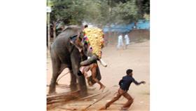 فيل هائج تعبيرية