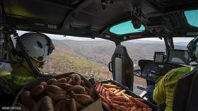 جزر وبطاطا.. استراليا تطعم الحيوانات في الغابات المشتعلة بالنيران