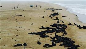 مأساة على سواحل ناميبيا