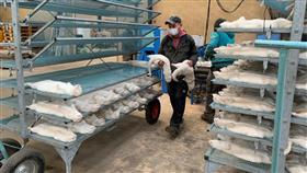 فرنسا: العثور على كورونا المنك في مزرعة غربي فرنسا