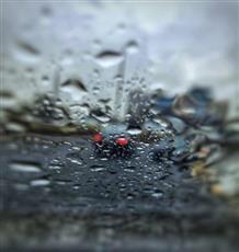 الأرصاد: هطولات مطرية من اليوم إلى الأحد رعدية وغزيرة أحياناً