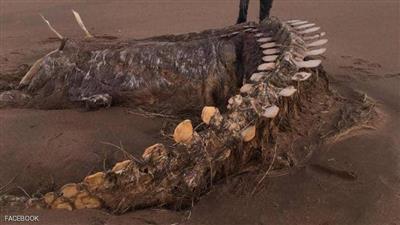 العاصفة «كيارا» تُخرج حيوانًا غريبًا من أعماق البحر