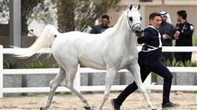 بطولة «كأس المربين» تختتم منافساتها في الكويت