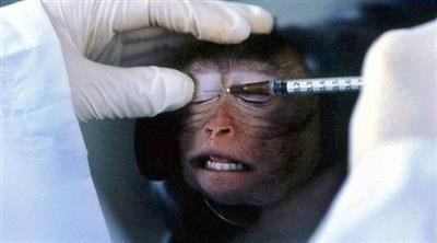 نقل فيروس كورونا لـ 2400 قرد لتطوير اللقاح المناسب