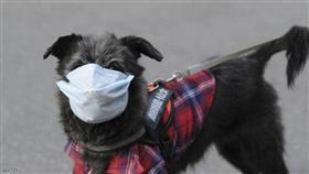 تسجيل أول إصابة بفيروس «كورونا» لدى «كلب»