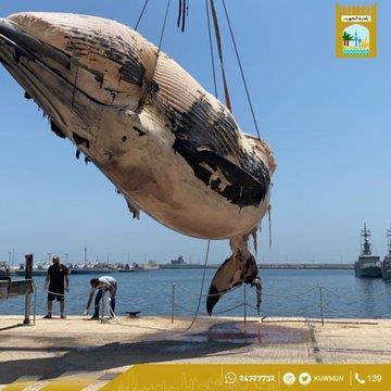 حوت نافق أمام الكوت البحري