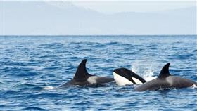 «وحوش البحر» تدفع إسبانيا لمنع المراكب الشراعية